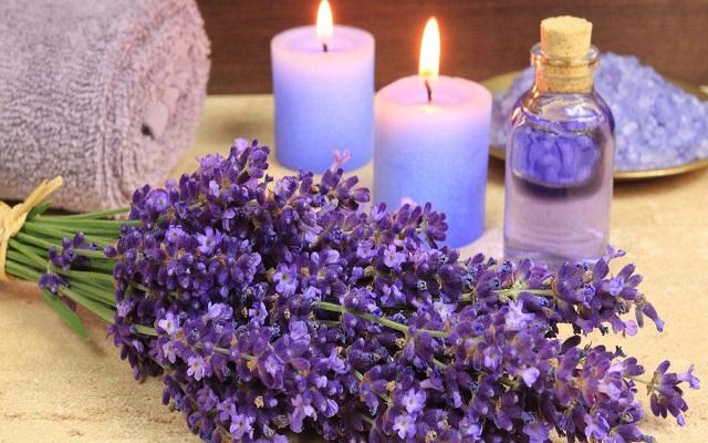 کاربرد گل لوندر یا اسطوخدوس در فنگ شویی