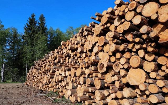 انواع چوب طبیعی در ساختمان سازی